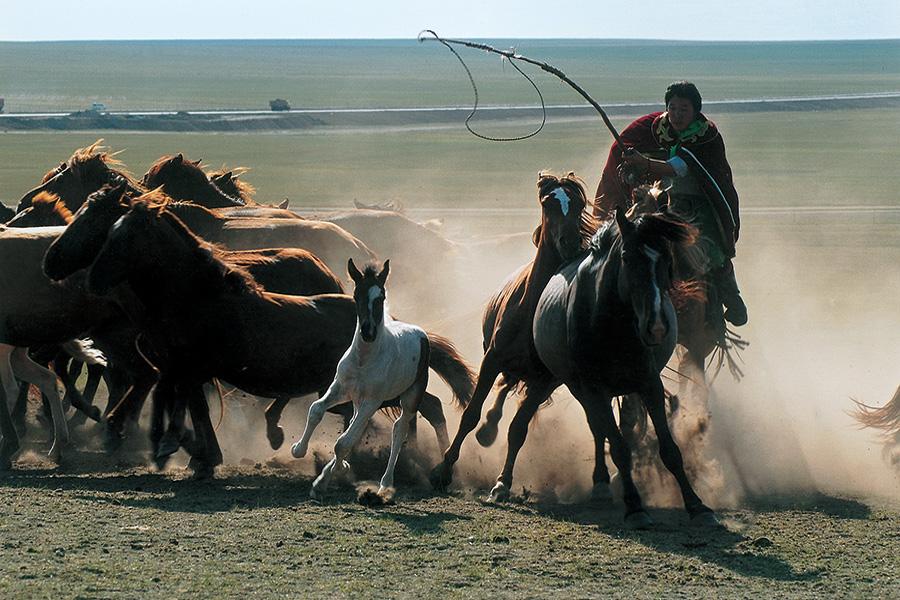 画家阎飞鸿在内蒙古草原艺术写生